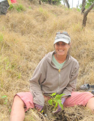 Native Hawaiian Plant Restoration is one of the many volunteer opportunities for Hawaii vacationers!