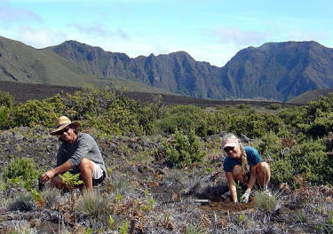 Volunteers in Hawaii: Friends of Haleakala National Park, Maui. Photo by Matt Wordeman.