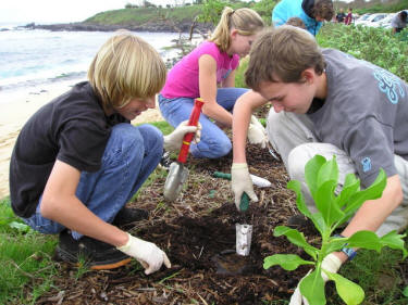 Children plant native Hawaiian plants at Hookipa Beach, Maui, Hawaii. Photograph from the Maui Surfriders Foundation.